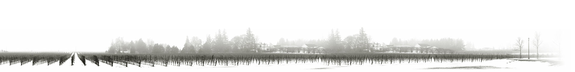 canadian ice wine